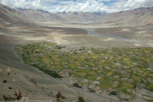 Fields of Stongde, Zanskar, August 2006