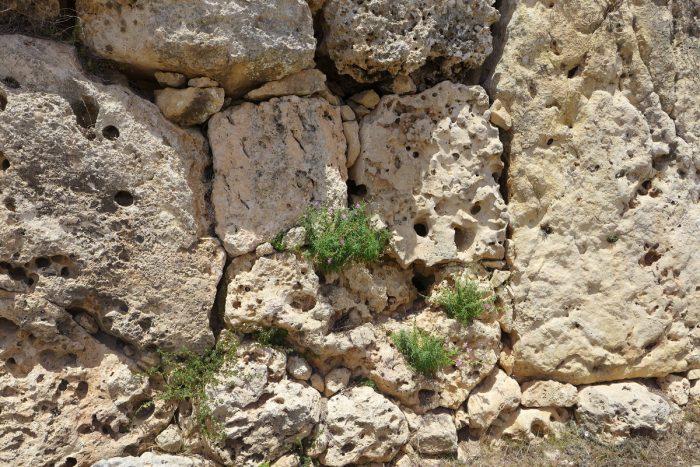 Walls of the neolithic temple of Ġgantija, Gozo, Malta